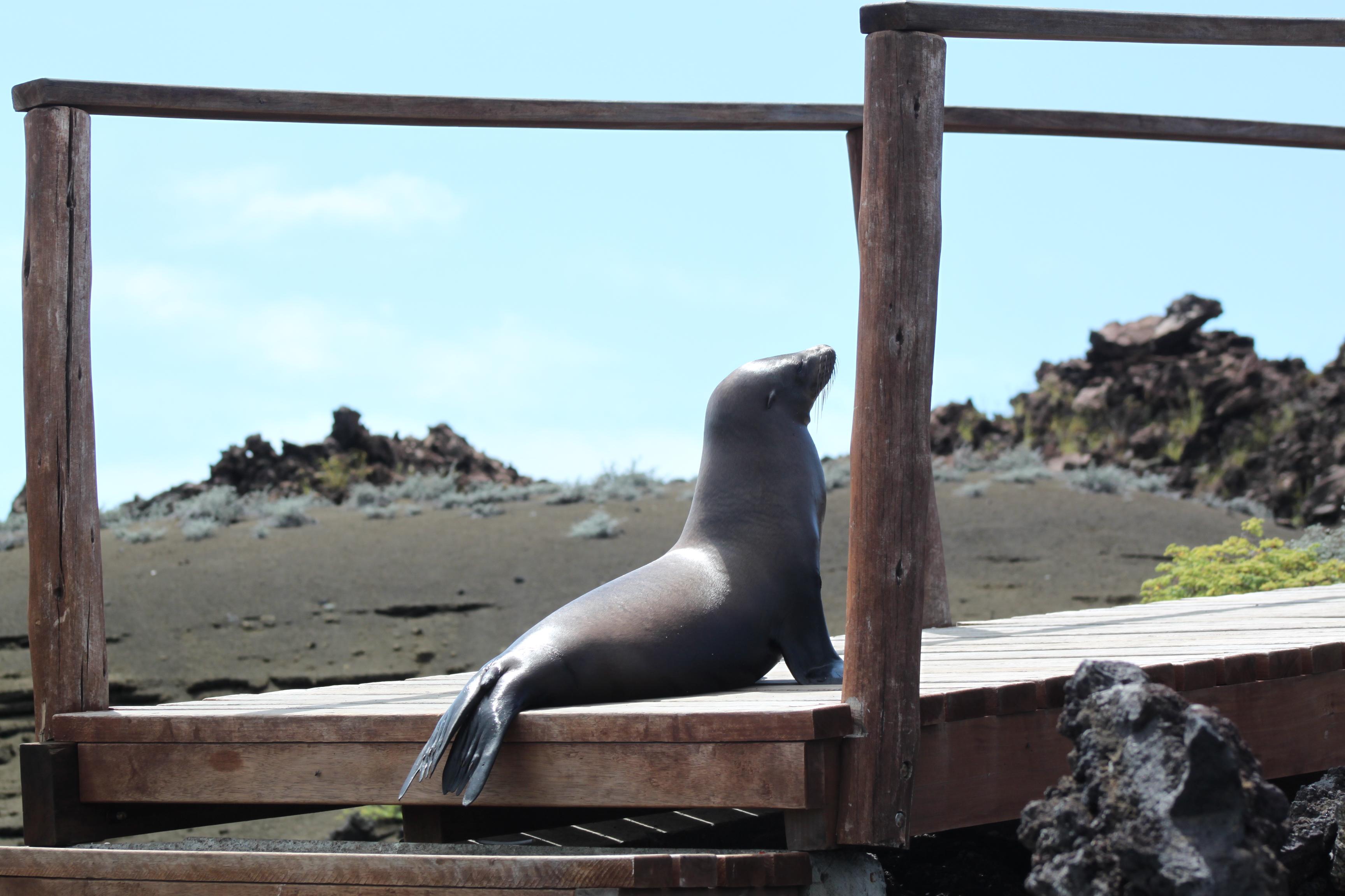 Sea-lion-gets-some-sun_rdellr-1-